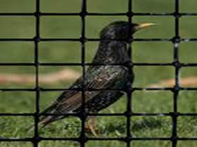 Environmentally Friendly Bird Control Netting